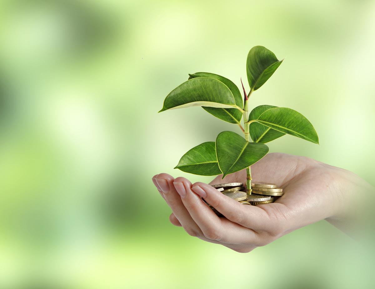 Das Pflänzchen einer perfekten HELP-Seniorenassistenz auf wirtschaftlichem Boden